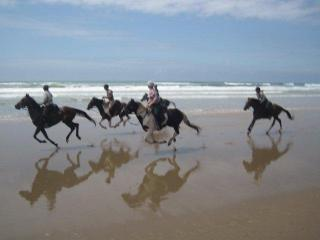 Gallop down endless beaches on fit top class trail horses