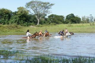 Swimming the horses at Sunray Farm on a Working Riding Holiday