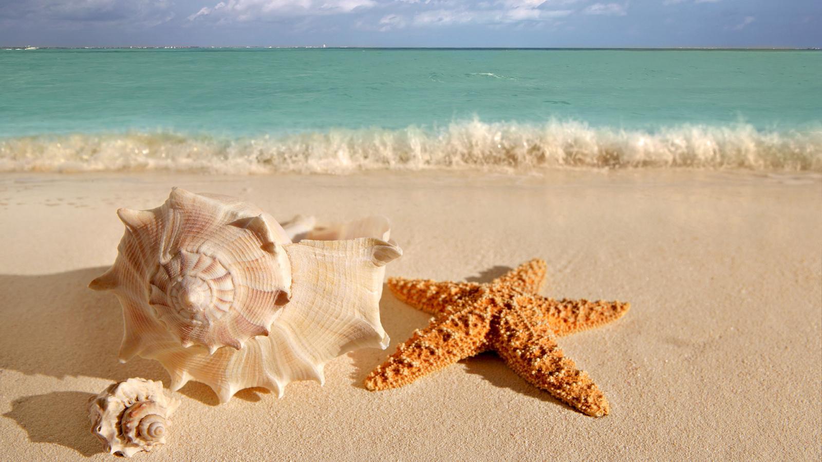 Sea Shells Guest House Wild Coast Sea
