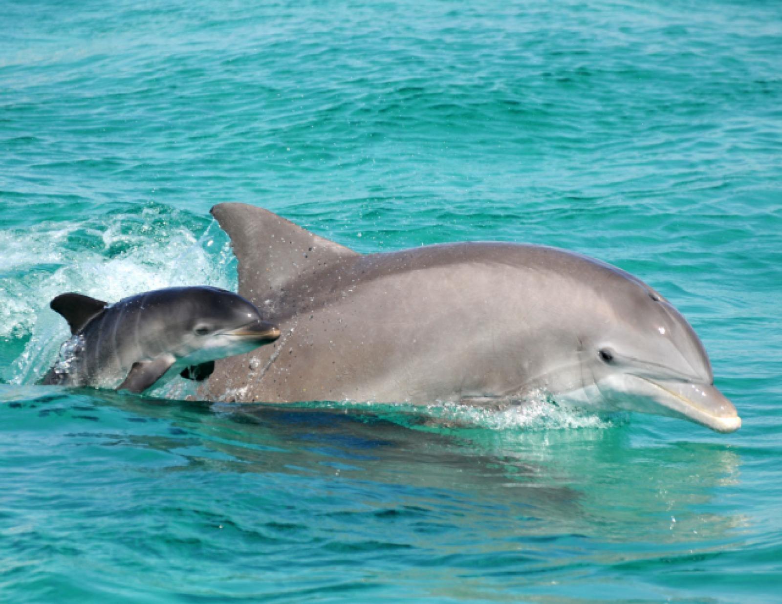 Tabbs and Baby Mattie Dolphin