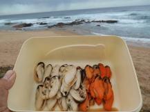 Male mussel is white, female is orange (Photo: Glen Phillips)